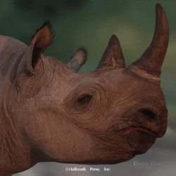 Eyes of Africa - Black Rhino