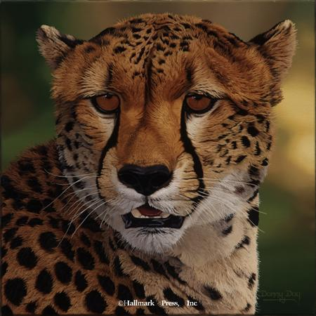 Eyes of Africa - Cheetah