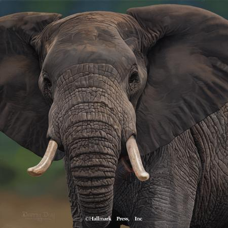 Eyes of Africa - Elephant