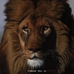 Eyes of Africa - Lion