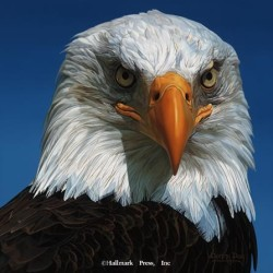 Eyes of North America - American Bald Eagle