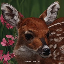 Eyes of North America - Bambi