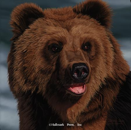 Eyes of North America - Brown Bear