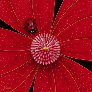 Red Lady Bug
